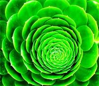 Tavasszal a legdominánsabb szín a zöld 335061575a